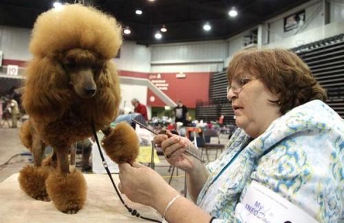 Huntington dog show draws from wide region - West Virginia