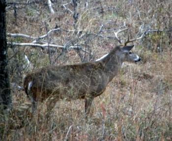 Hunters rejoice as deer season returns west virginia for Lifetime fishing license va