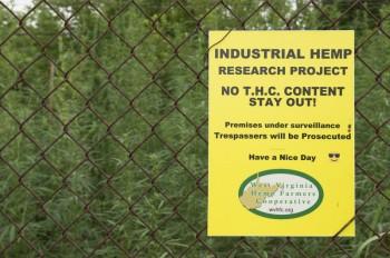 Industrial hemp gets its start in West Virginia - West