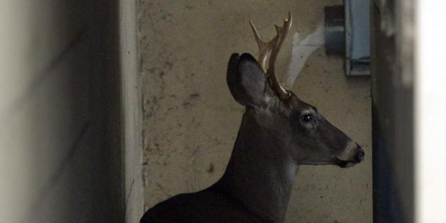 Mall proves no refuge for deer in Charleston