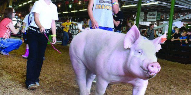 Marshall County Fair, Grecian Food Festival keep Ohio Valley entertained