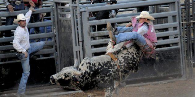 A Fair amount of bull