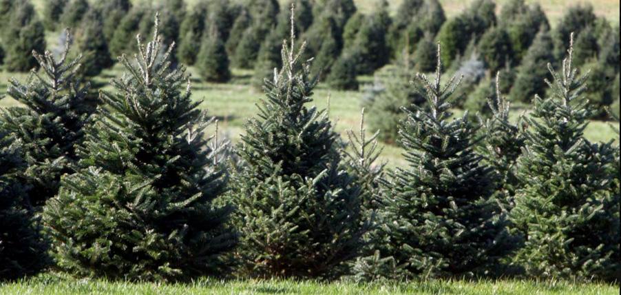 National tree shortage not affecting Huntington-area ...